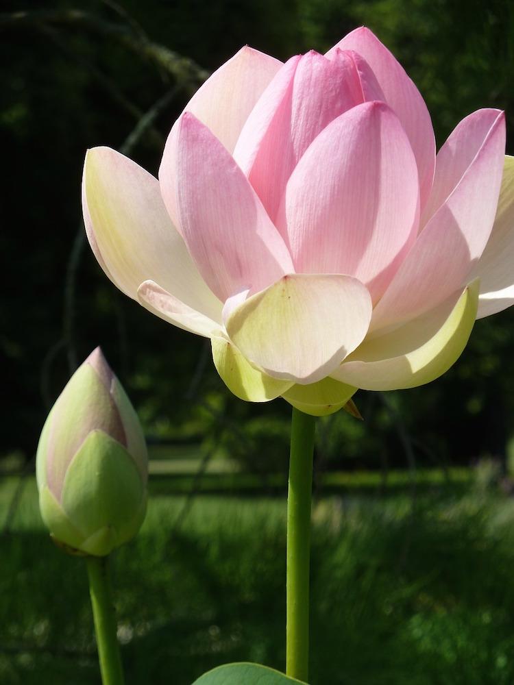 Sangha Analytische Meditation Gruppe Online