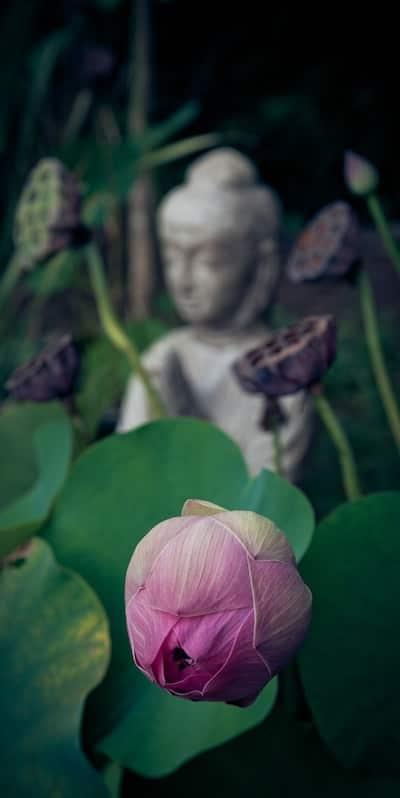 Depression, Achtsamkeit und buddhistische Psychologie