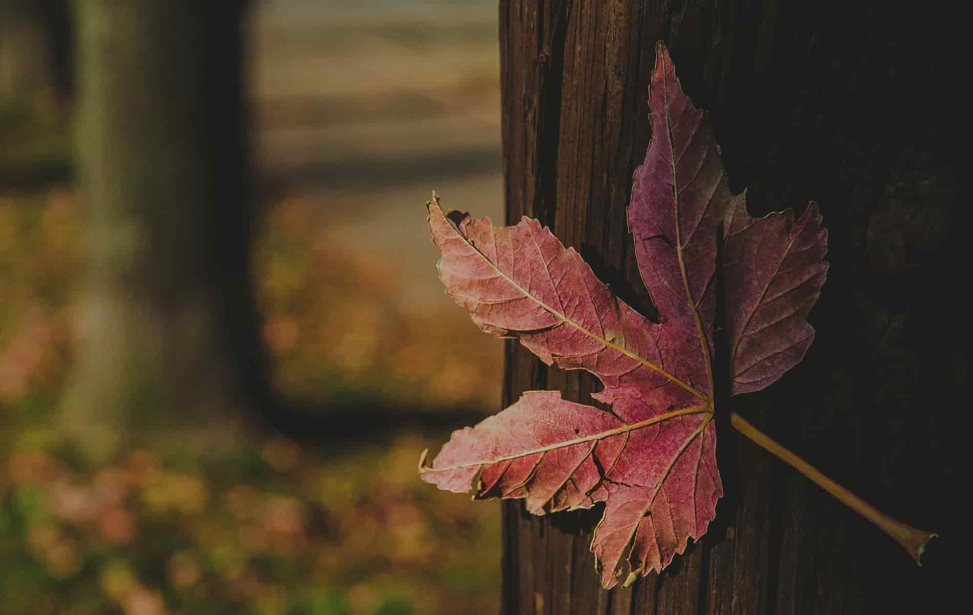 What autumn teaches us about letting go
