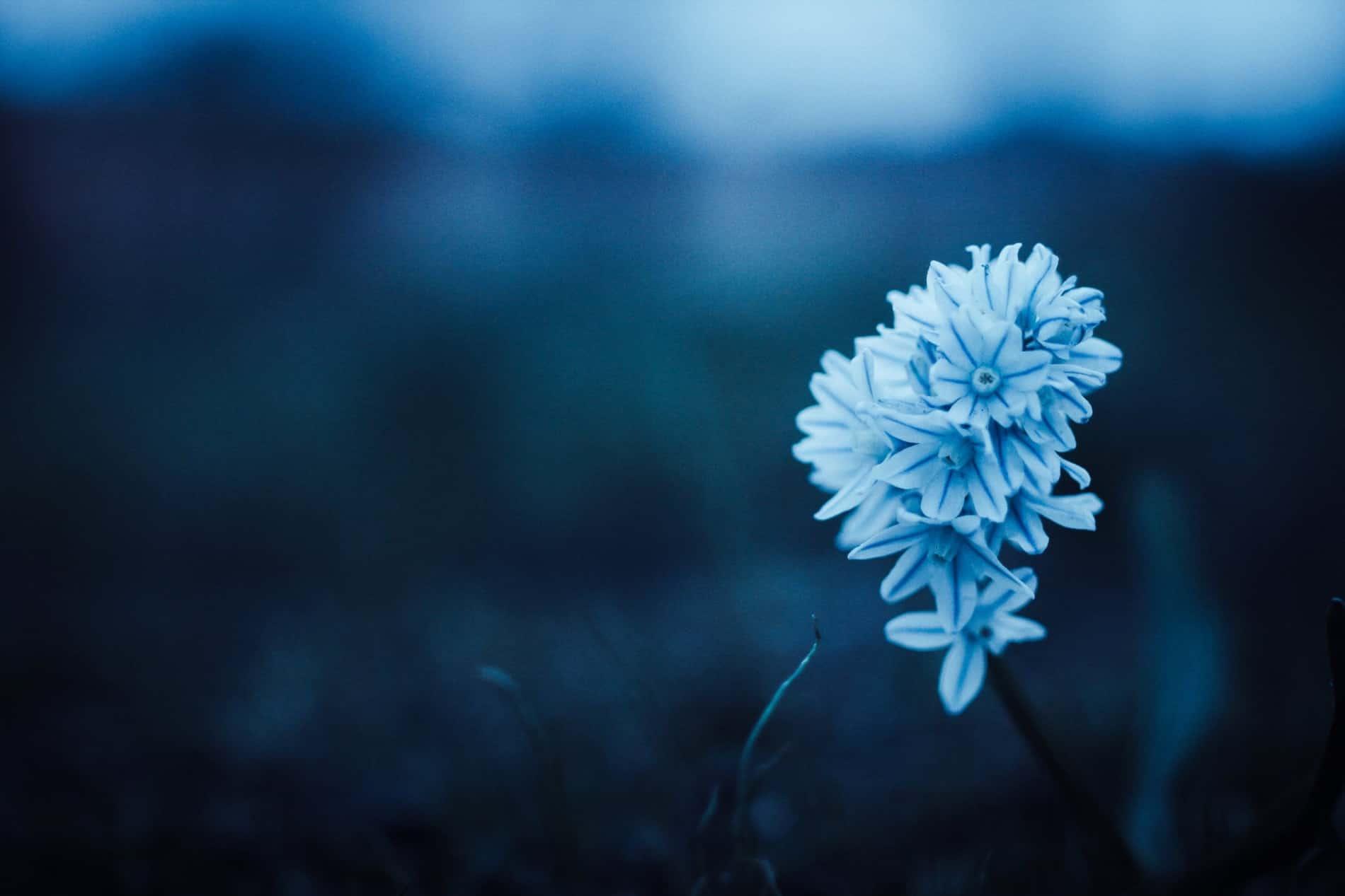 Selbstliebe 2/2 – Heilung der Beziehung zu uns selbst